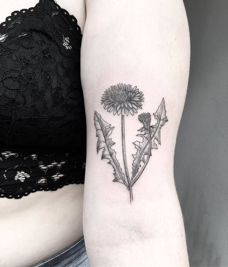 Sow thistle tattoo