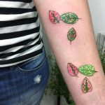 Pink and green leaves of polka dot plant tattoo