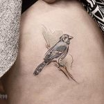 Blue jay tattoo by andrew szkotti