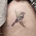 Blue jay tattoo by andrew szkotti