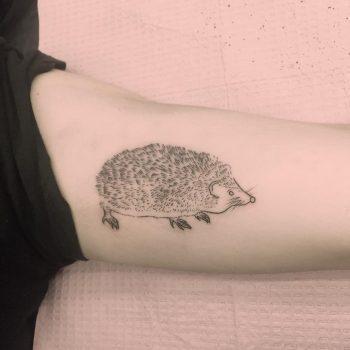 Cute hedgehog tattoo by Jen Wong