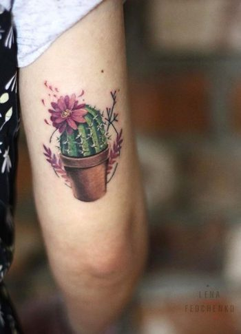 Colorful cactus in a flowerpot