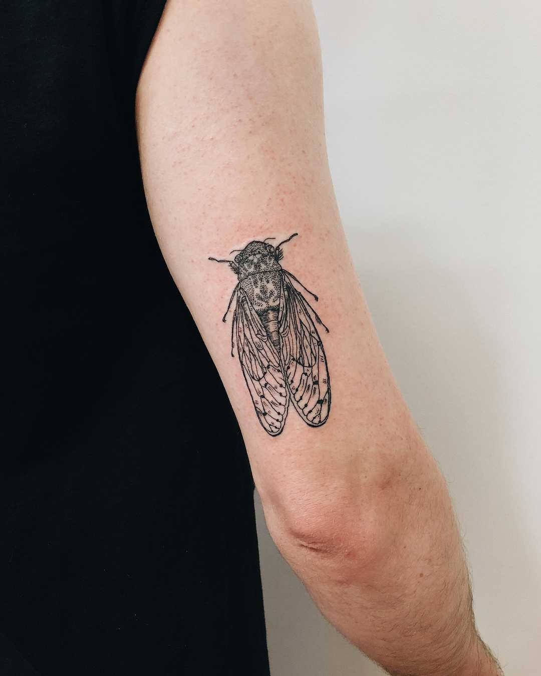 Cicada Tattoo On The Triceps Tattoogridnet