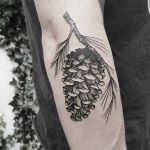 Conifer cone tattoo by Roald Vd Broek