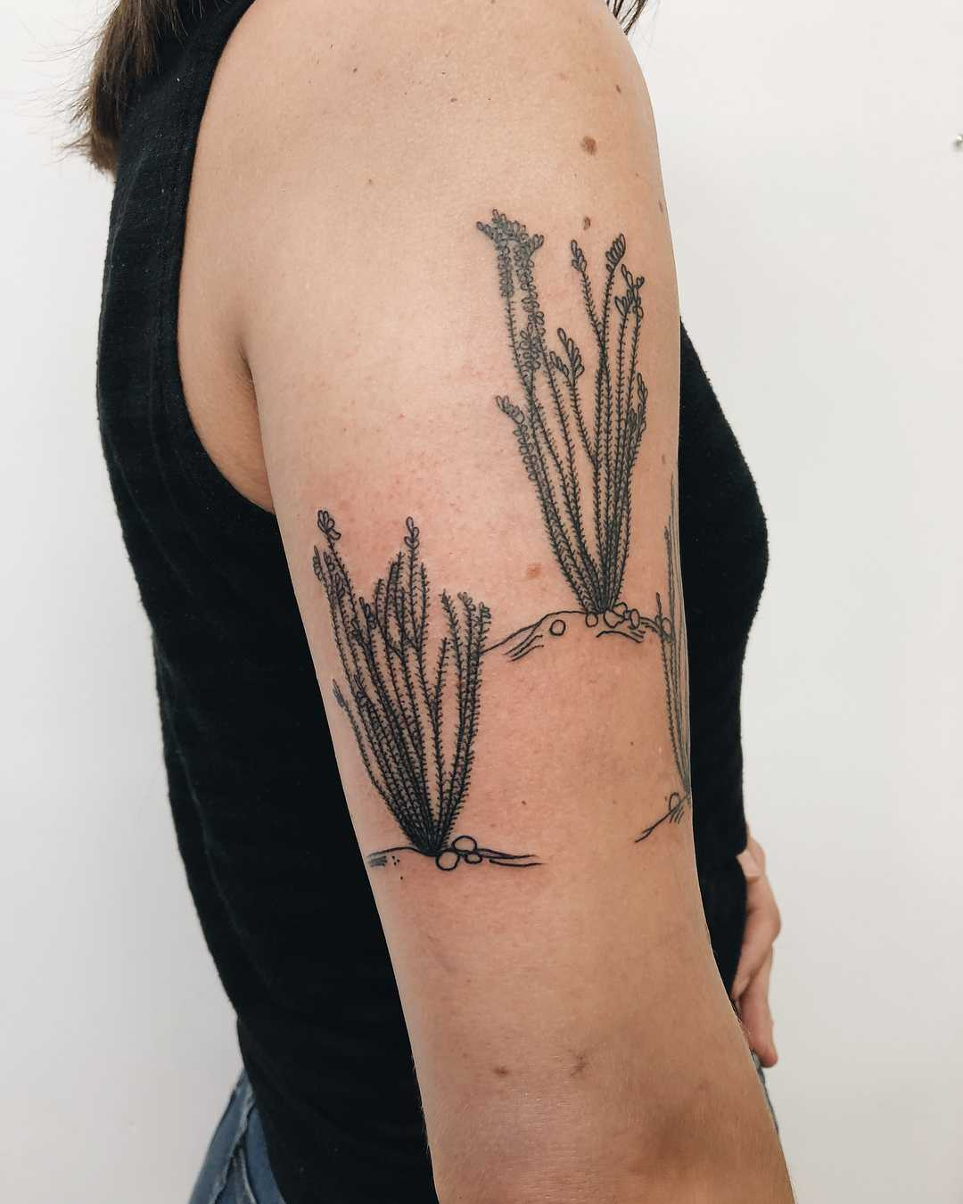 Ocotillo tattoo