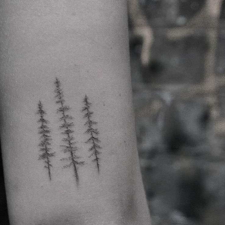 Single needle trees by Lindsay April