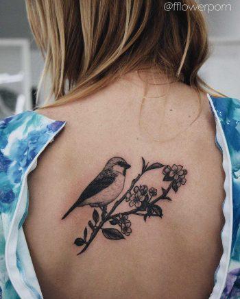 Bird on an apple blossom branch