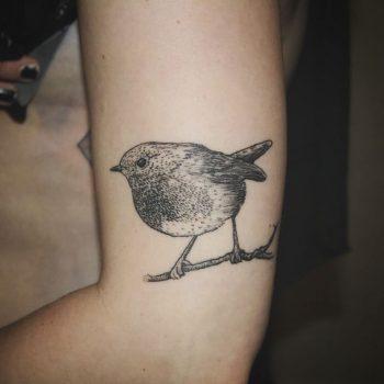 Robin tattoo by tattooist Spence @zz tattoo