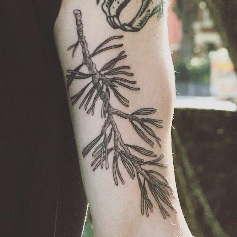 Pine branch by tattooist Spence @zz tattoo