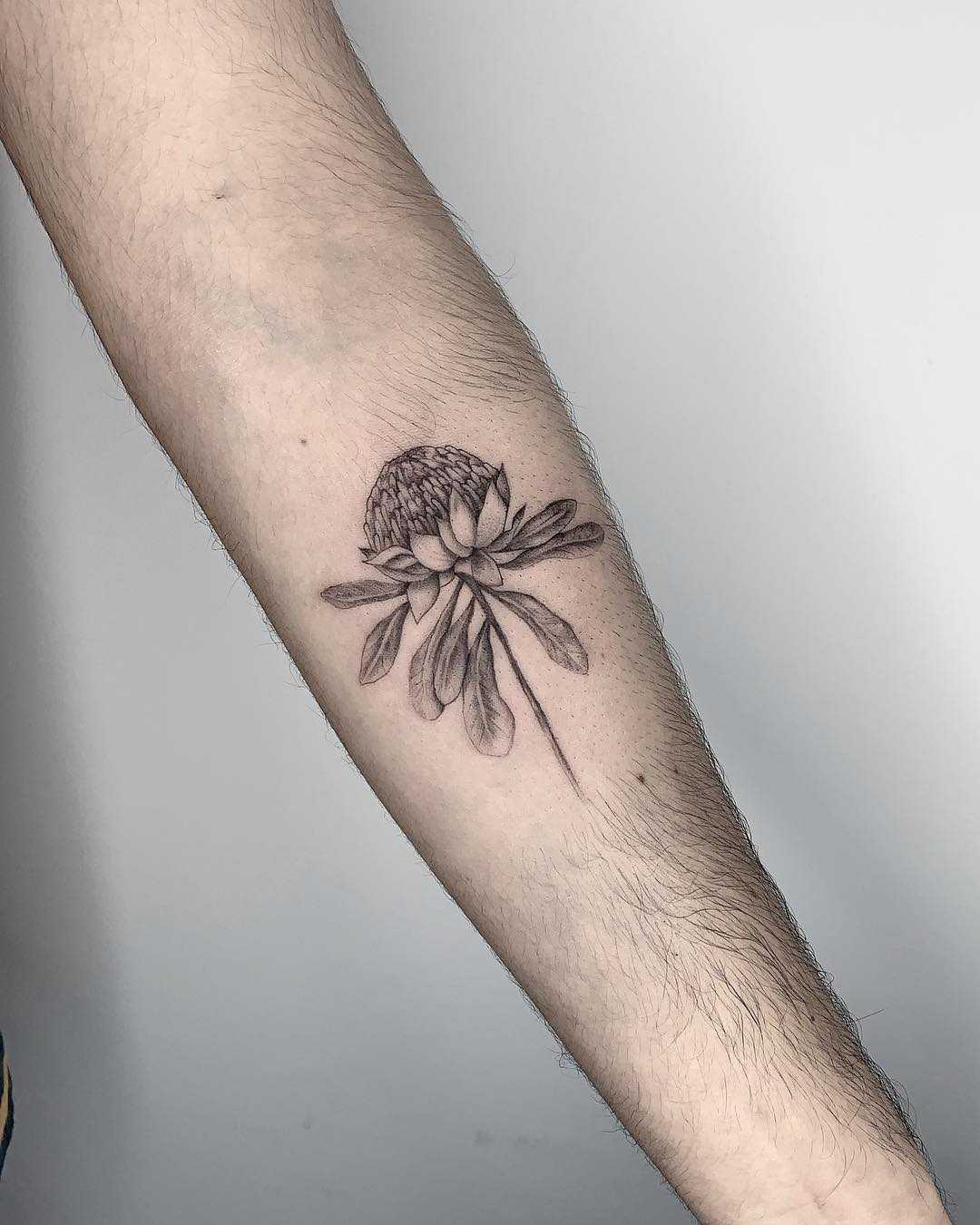Fineline Waratah flower tattoo by Conz Thomas