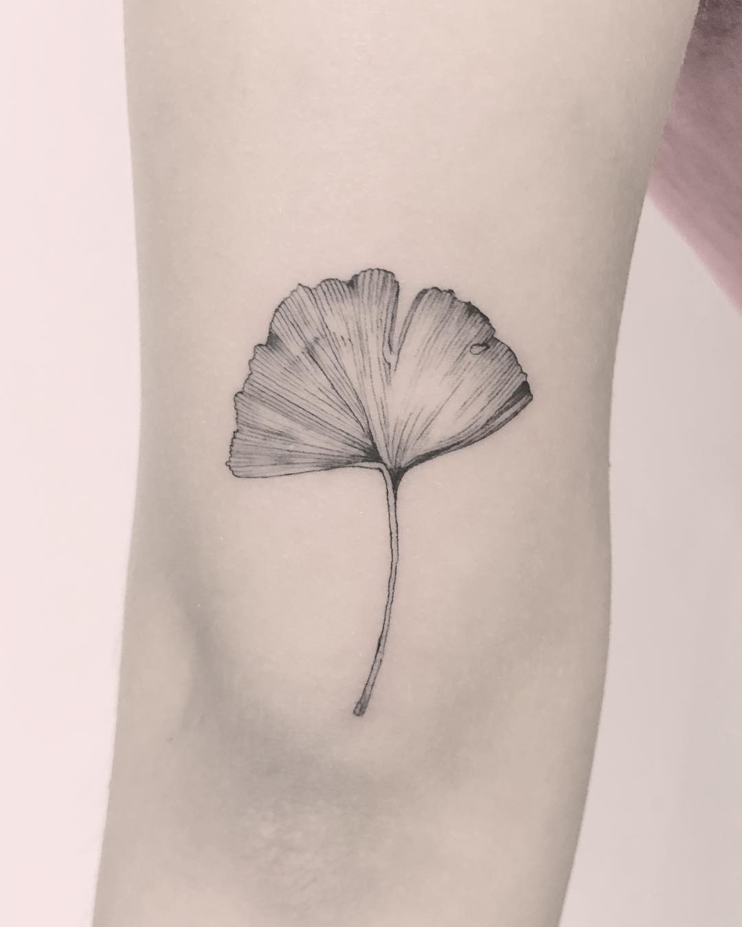 Gingko biloba tattoo by Annelie Fransson