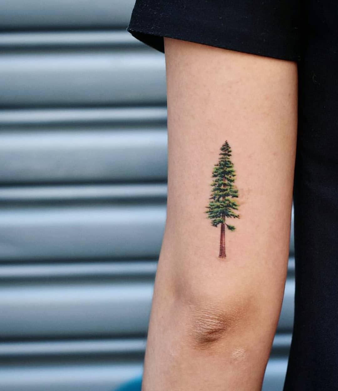Pine tree tattoo by Dragon Ink