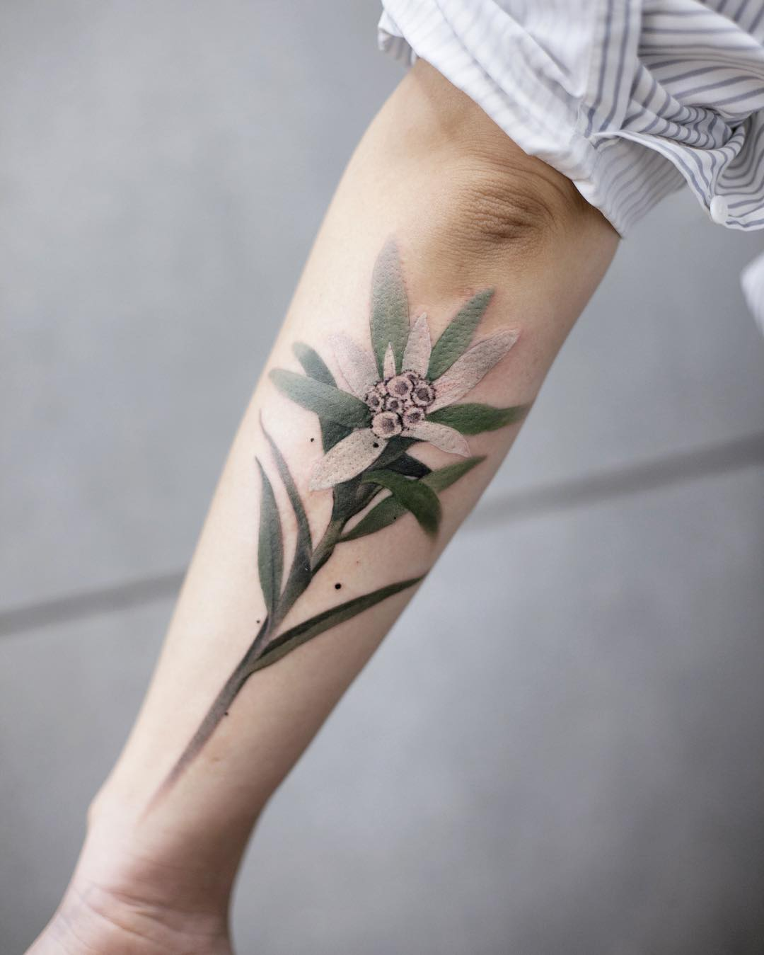 Edelweiss tattoo by tattooist Chenjie