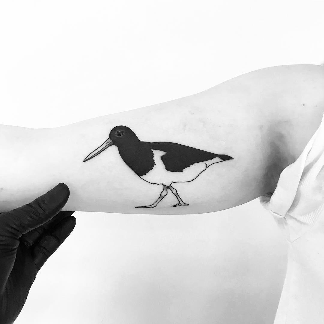 Oystercatcher tattoo by tattooist pokeeeeeeeoh