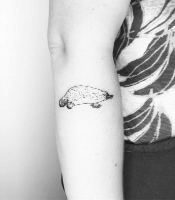 Another Platypus by Jake Harry Ditchfield