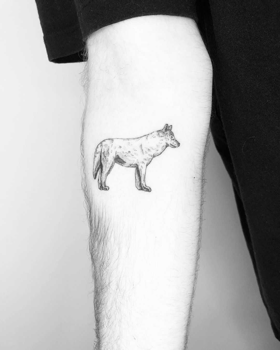 Wolf by Jake Harry Ditchfield