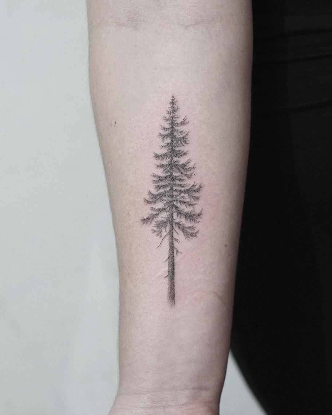 Douglas fir tattoo by Evgenii Andriu