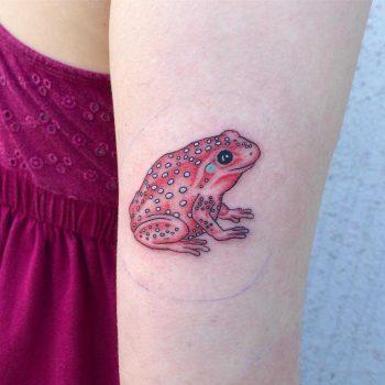 Frog by Dane Nicklas