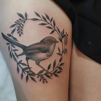 Female fairy wren by @sophiabaughan