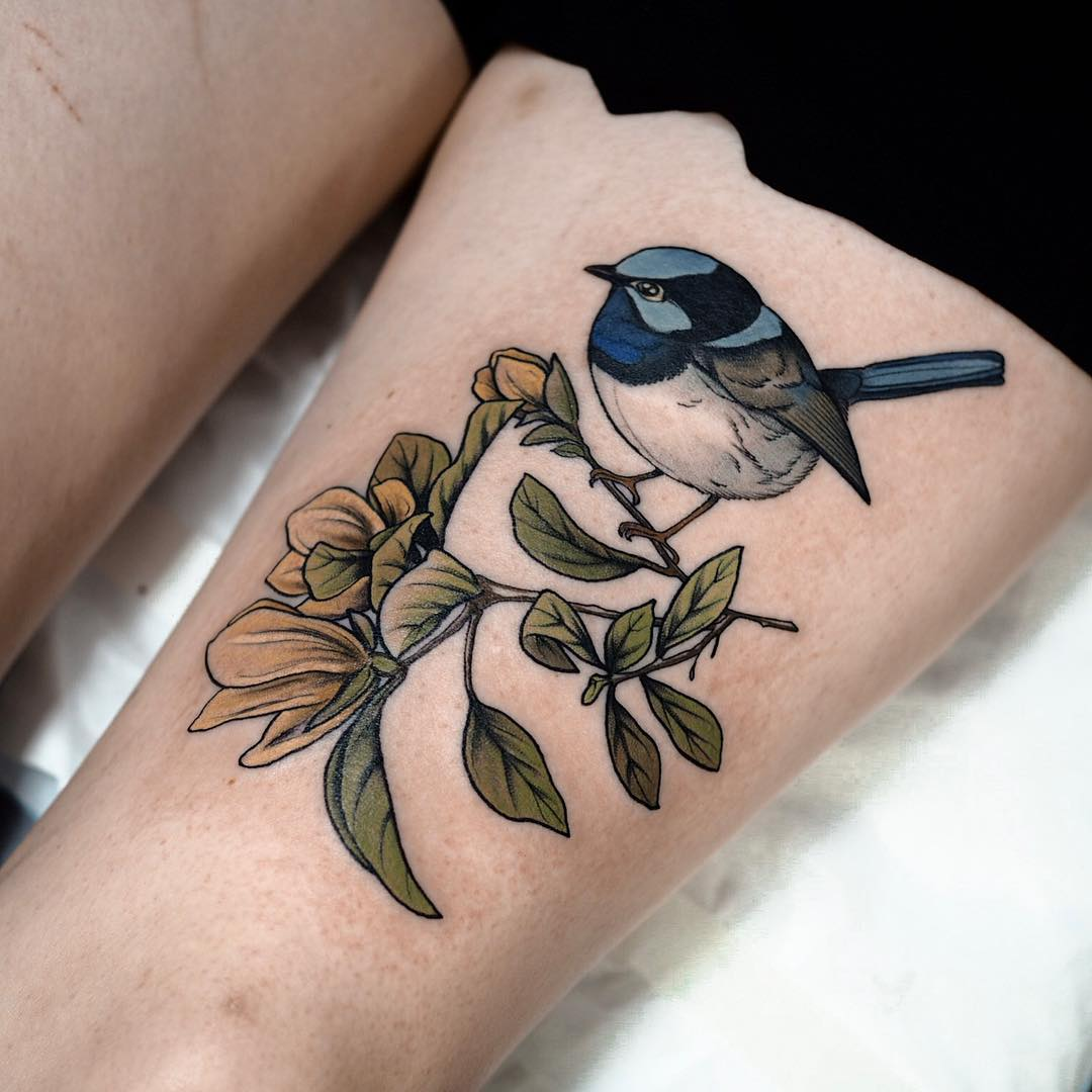 Male fairy wren and yellow magnolia by @sophiabaughan