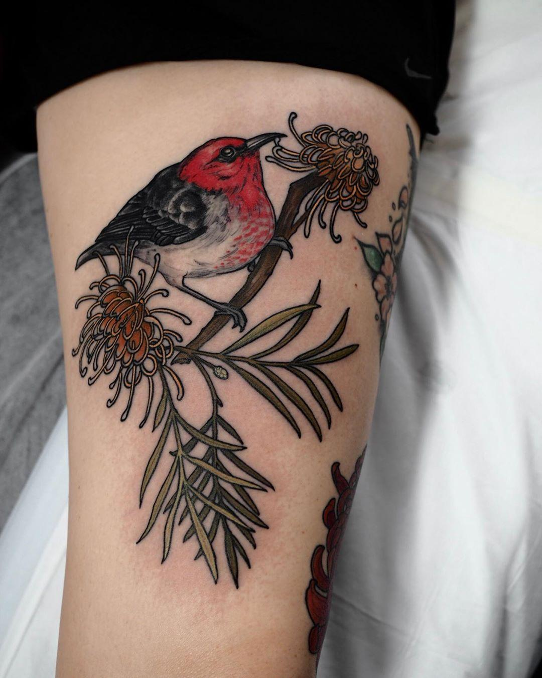 Red-faced Honeyeater by @sophiabaughan