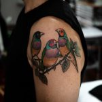 Three little Gouldian Finches by @sophiabaughan